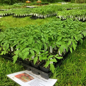 01 a plant sale 4 mini