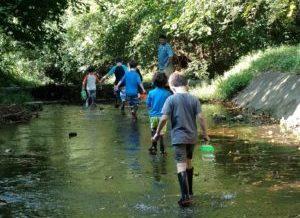 Creek Stomping
