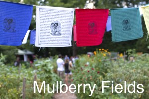 MULBERRY FIELDS RENTAL PAGE