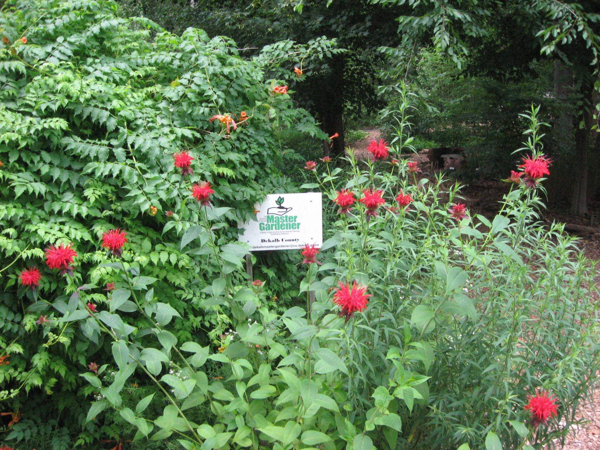 Marietta Munity Gardens Garden Ftempo