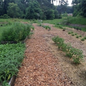 Sugar Creek Garden and Herb Farm