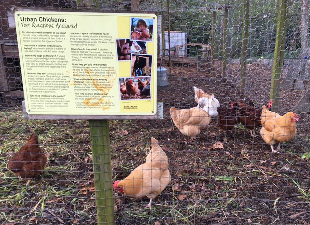 wcchickens